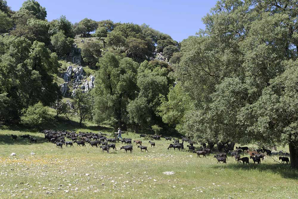 Parque natural Zuheros